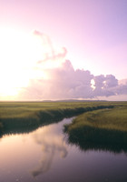 Spartina Sunrise V