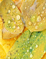 Autumn Raindrops