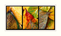 """Intimate Autumn"" triptych"