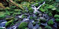 Olympic Mountain Stream